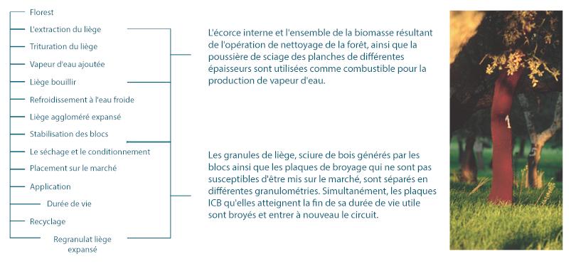 Organigramme de production du liège